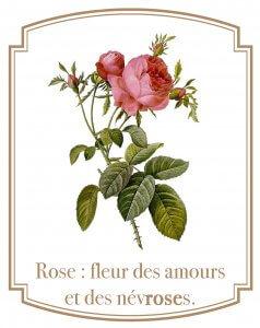 Une surdéfinition de la rose : fleur des amours et des névroses.