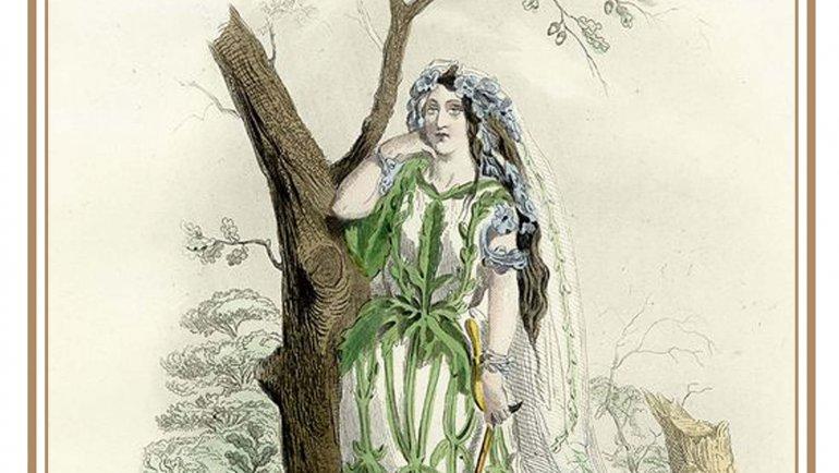 La verveine : rameaux sacrés et herbe aux enchantements
